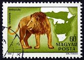 Postage stamp Hungary 1981 Lion, Panthera Leo, Big Cat — Foto de Stock