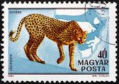 Postage stamp Hungary 1981 Cheetah, Acinonyx Jubatus, Cat — Stockfoto