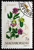 Postage stamp Hungary 1991 Cathedral Bells, Flowering Plant — Stock Photo