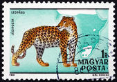 Postage stamp Hungary 1981 Leopard, Panthera Pardus, Big Cat — Stock Photo