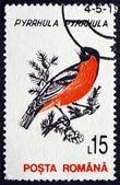 Postage stamp Romania 1993 Eurasian Bullfinch — Stock Photo