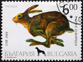 Postage stamp Bulgaria 1993 European Hare — Stock Photo