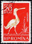 Postage stamp Romania 1957 White Spoonbill — Stock Photo