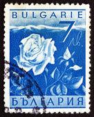 Postage stamp Bulgaria 1938 Rose, Flower — Stockfoto