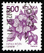 Postage stamp Poland 1989 Wild Rose — Stock Photo