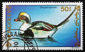 Postage stamp Mongolia 1991 Long-tailed Duck, Sea Duck — Stock Photo