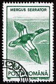Postage stamp Romania 1991 Red-breasted Merganser, Bird — Stock Photo