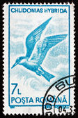 Postage stamp Romania 1991 Whiskered Tern, Seabird — Stock Photo