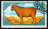 Postage stamp Mongolia 1989 Goat, Domestic Animal — Stock Photo