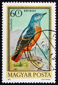 Postage stamp Hungary 1973 Blue Rock Thrush, Bird — Stock Photo