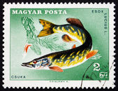 Postage stamp Hungary 1967 Northern Pike, Fish — Stock Photo