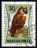 Postage stamp Hungary 1962 Eurasian Eagle Owl — Stock Photo