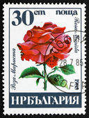 Postage stamp Bulgaria 1985 Rose, Rosa Marista, Flower — Stock Photo