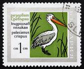 Postage stamp Bulgaria 1968 Dalmatian Pelican, Bird — Stock Photo