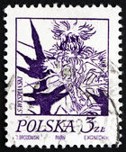 Postage stamp Poland 1974 Thistle, Flowering Plant — Stock Photo