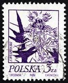 Postage stamp Poland 1974 Thistle, Flowering Plant — Stock Photo
