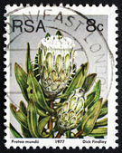 Postage stamp South Africa 1977 Forest Sugarbush, Flowering Shru — Foto Stock