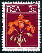 Postage stamp South Africa 1974 Geranium, Flowering Plant — Stock fotografie