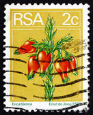 Postage stamp South Africa 1974 Heather, Flowering Shrub — Stock Photo