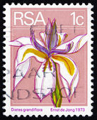 Postage stamp South Africa 1974 Wild Iris, Perennial Plant — Stock Photo