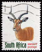 Postage stamp South Africa 1998 Impala, Antelope — Stockfoto