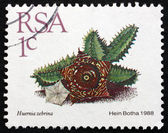 Postage stamp South Africa 1988 Huernia Zebrina, Succulent Plant — Stock Photo