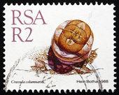 Postage stamp South Africa 1988 Crassula Columnaris, Succulent P — Stock Photo