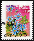 Postage stamp South Africa 2000 Blue Marguerite, Flowering Plant — Foto Stock