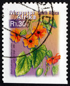 Postage stamp South Africa 2000 Black Eyed Susy, Flowering Plant — Stock Photo