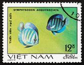 Postage stamp Vietnam 1981 Blue Discus, Fish — Stock Photo