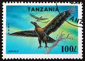 Postage stamp Tanzania 1994 Osprey, Bird of Prey — Stock Photo