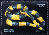 Postage stamp Tanzania 1996 Banded Krait, Snake — Stock Photo