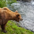 Bear on Alaska — Stock Photo #12295363