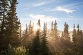 Soleggiata foresta — Foto Stock