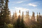 阳光森林 — 图库照片