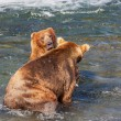 Bear on Alaska — Stock Photo #12416866
