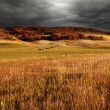 Stock Photo: Autumn field