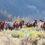 Wild horses — Stock Photo #12752759