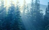 Sunny forest — Stockfoto