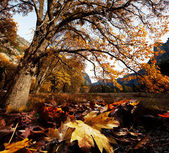 Autumn in Yosemite — Stock Photo