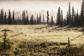 草地上的雾 — 图库照片