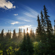 Sunny forest — Stock Photo