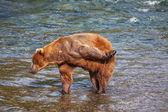 Oefenen op alaska — Stockfoto