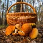 Mushroom — Stock Photo #13267771