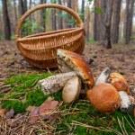Mushroom — Stock Photo #13267851