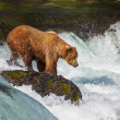 Bear on Alaska — Stock Photo #13399437