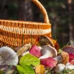 Mushroom — Stock Photo #13399622