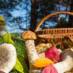 Mushroom — Stock Photo #13399636