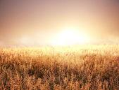 Fog on meadow — Stockfoto