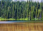 деревья на берегу озера — Стоковое фото